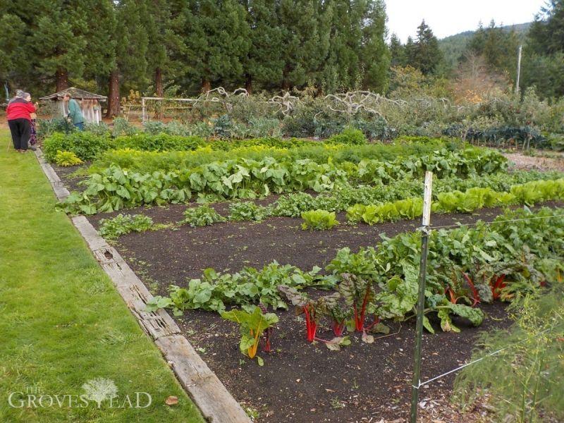 Back to Eden Gardens | Back to Eden Gardening | Pinterest | Gardens ...