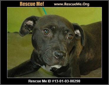 Michigan Boxer Rescue Adoptions Rescueme Org Boxer Rescue Dog Love Boxer Dogs