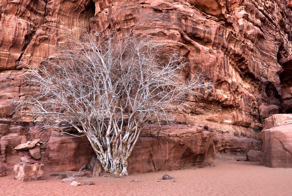 Wadi Rum Protected Area #wadirum