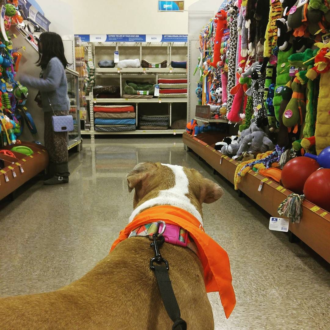 shopping trip to petsmart this evening which toy should i choose
