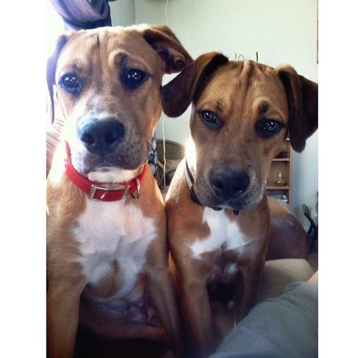 Sampson and cruzer