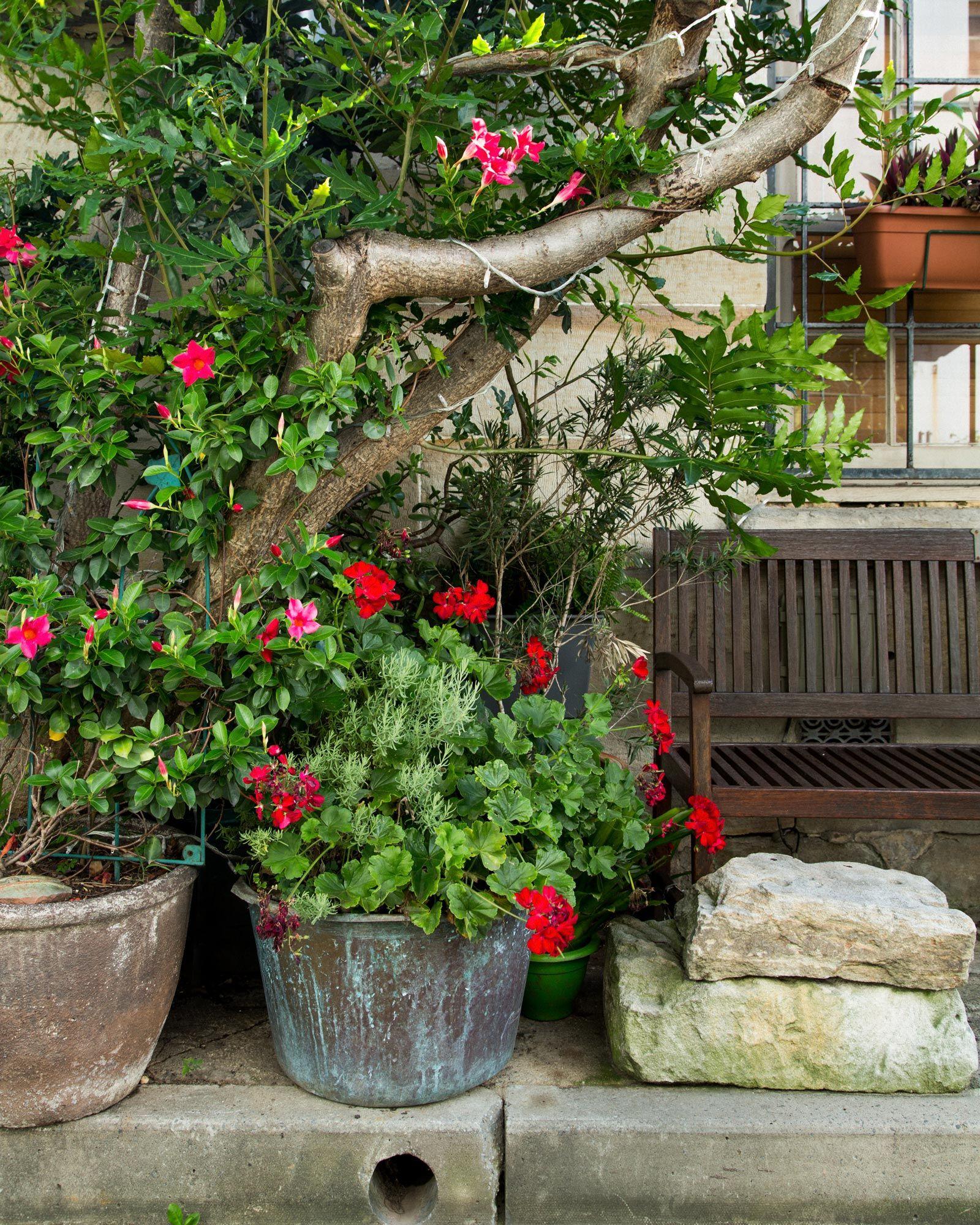 Plant/Life Cat Alley Plants, Indoor garden, Small gardens