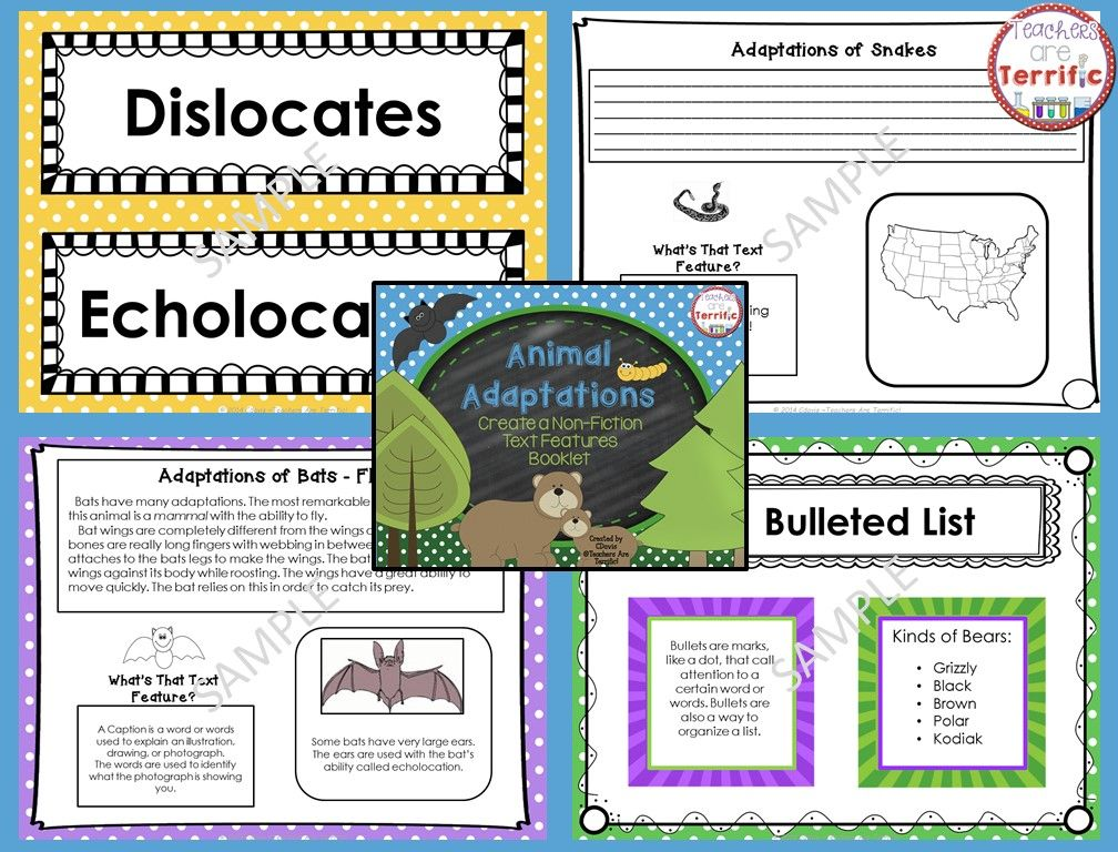 Create a booklet about Animal Adaptations! Students work on non-fiction text features by identifying and then using the features in their own writing! #TpT #InformationalText