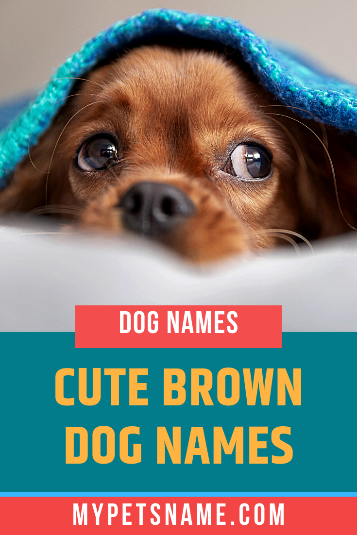 Cute Brown Dog Names Brown Dog Names Dog Names Brown Dog