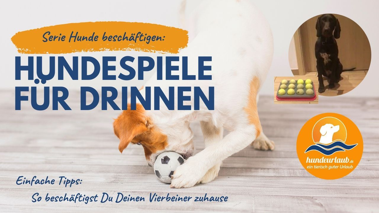 Furminator Striegel Fur Hunde Hunde Hundepflege Ausgestopftes Tier