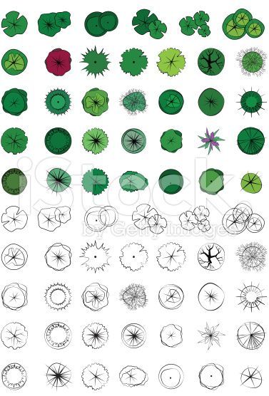 Landscape design symbols trees top view vector colour for Draw site plan free