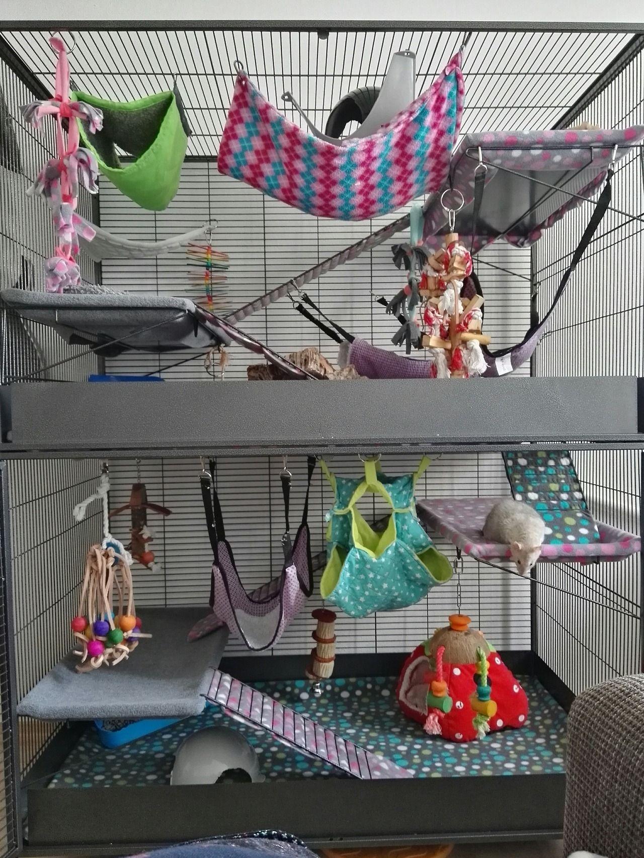 Savic Suite Royal Xl Squeakyfuzzies Tumblr Com Rat Cage Pet Rats Pet Rodents