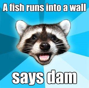 a fish runs into a wall