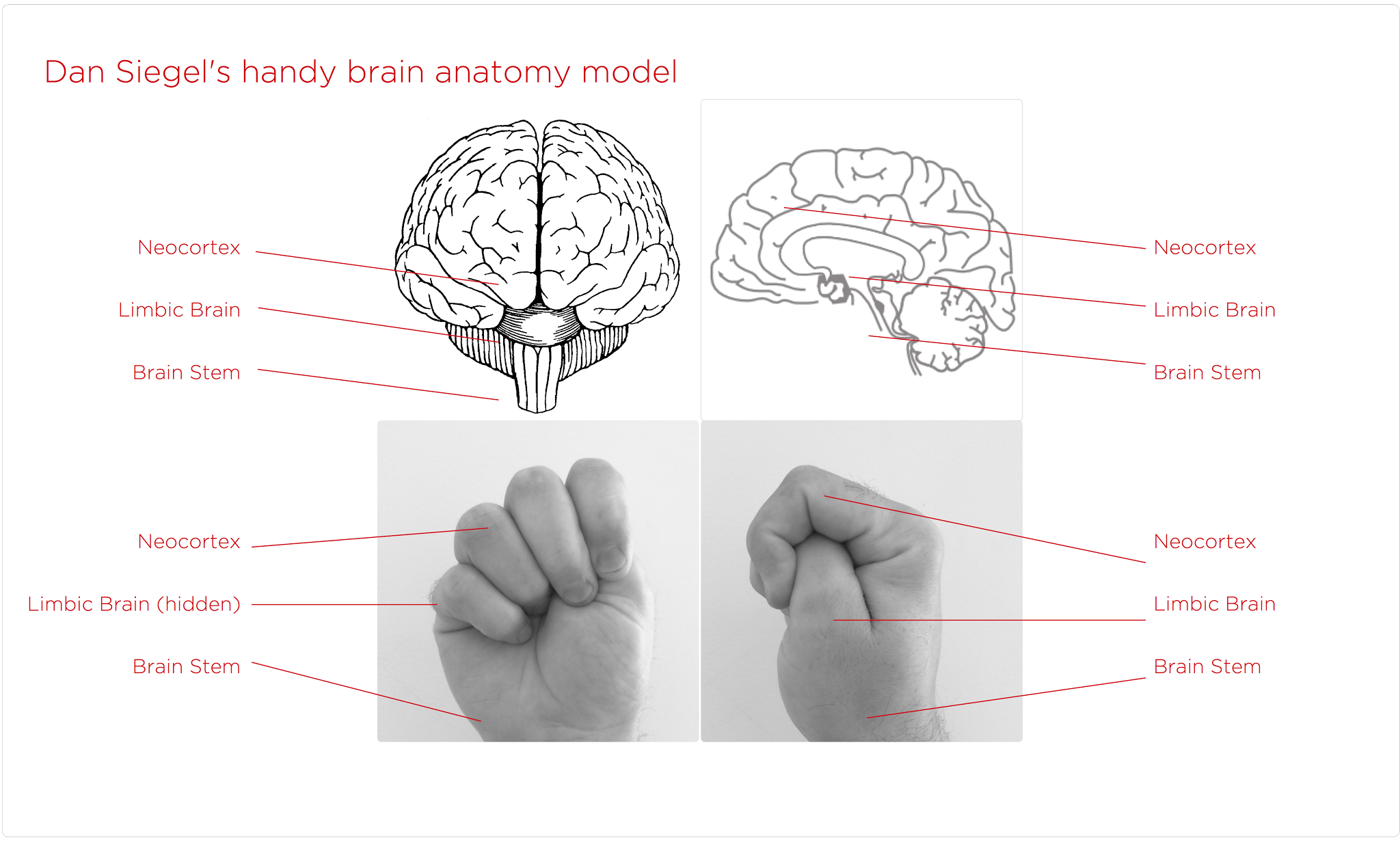 Dan Siegel Brain Model