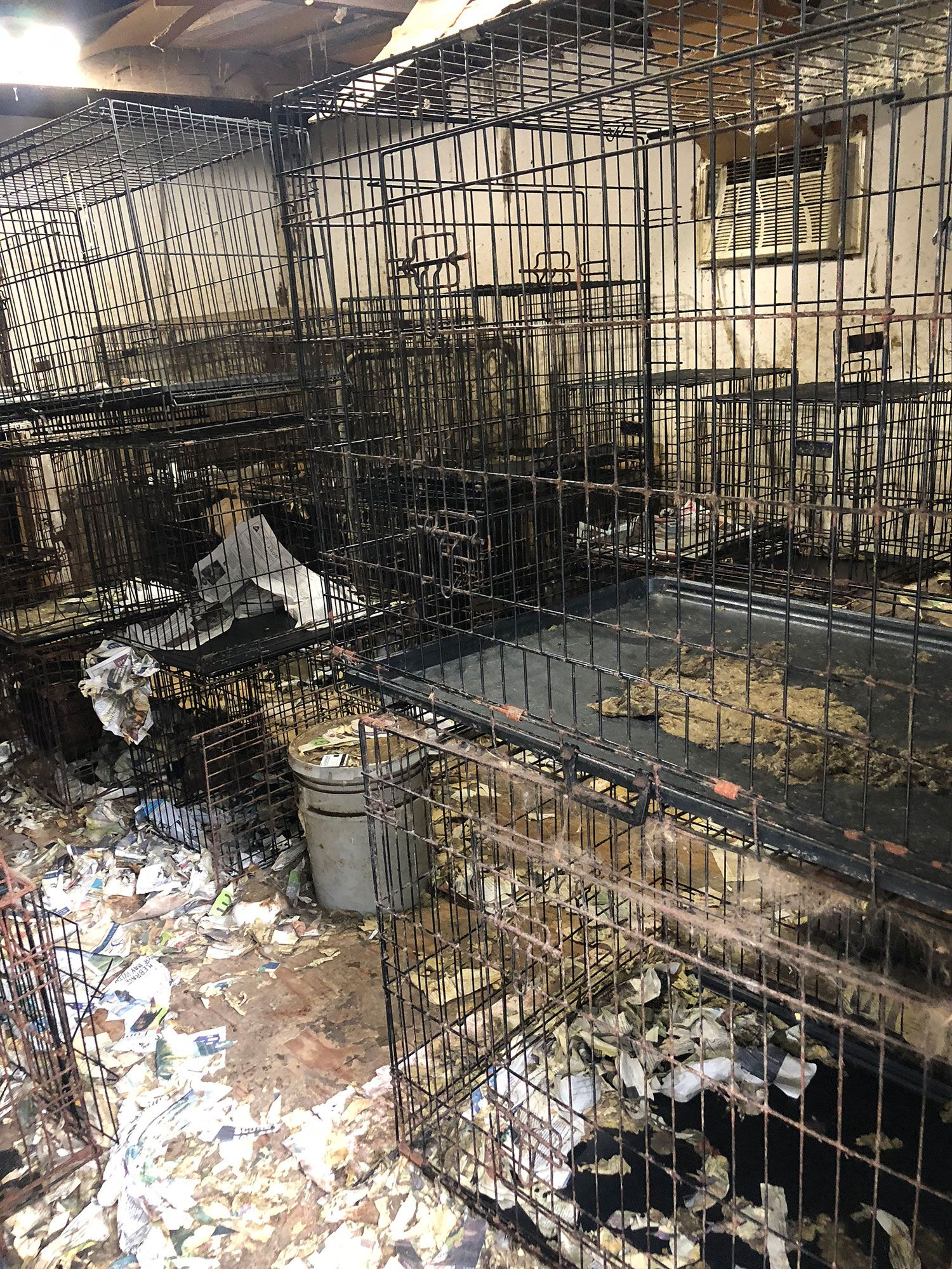 More Than 80 Dogs Including Days Old Puppies Rescued From