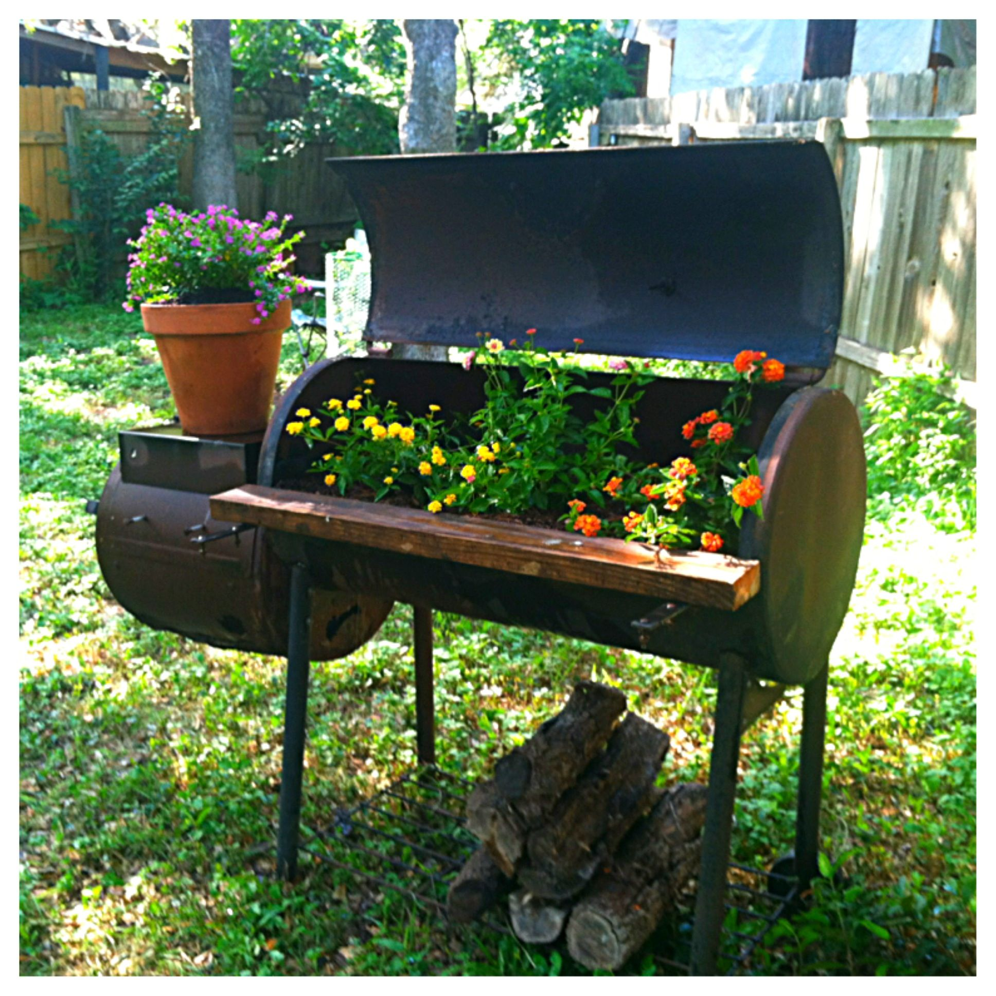 My recycled rusted old bbq pit made a lovely planter for Flower fire pit