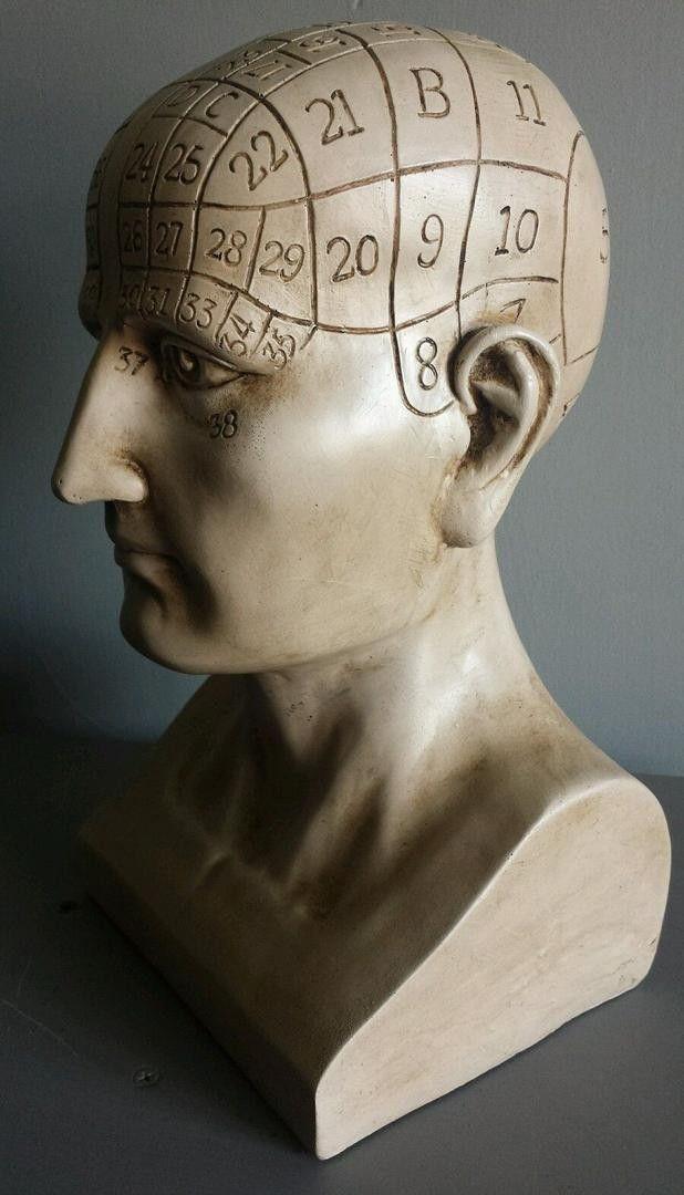 Large Phrenology Head - life size bust, vintage style model. Sold on eBay UK on Aug 17, 2015