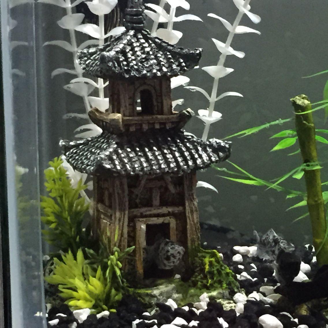 Fish for asian aquarium - Molly Fish In Asian Aquarium