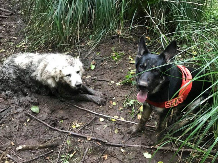 A Rescue Dog Lead His First Mission And Saved A Family S Lost Dog Who Was Trapped In Mud For 2 Days Dog Search Rescue Dogs Search And Rescue Dogs