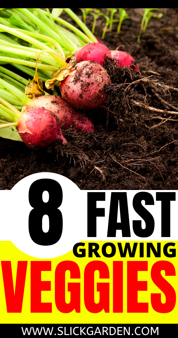 8 Fast Growing Vegetables That You Can Grow In A Hurry In 640 x 480