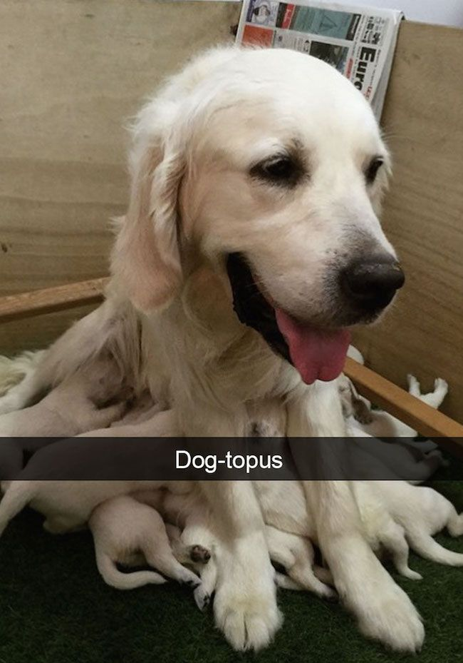 30 Of The Funniest Dog Snapchats The Internet Has Ever Given Us