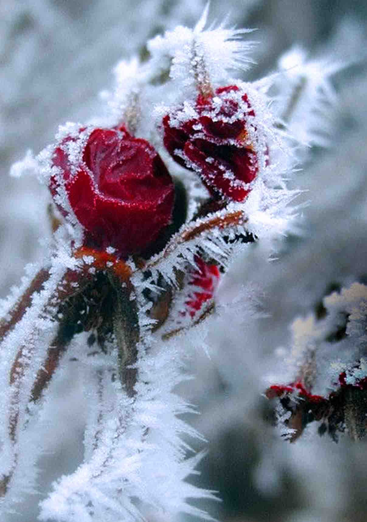 Pin by a.l.s (3*) on O.U. a.T Flowers, Winter garden