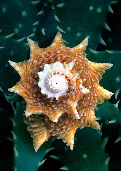 25 Beautiful Images Of Seashells Spirals In Nature Sea Shells