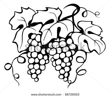 Black Drawing Of Grape And Leaves Vector 86726503 Shutterstock Grape Drawing Vine Drawing Drawings