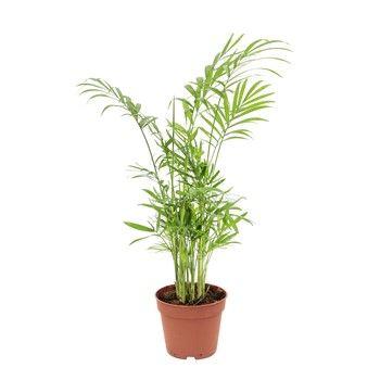 10 plantes d\'intérieur à shopper d\'urgence à Truffaut | Plantes d ...
