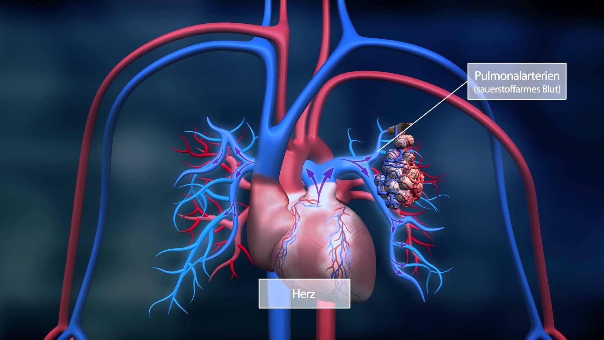 Die Lunge - Bayer Science Video - Folge 04 | Körpersysteme ...