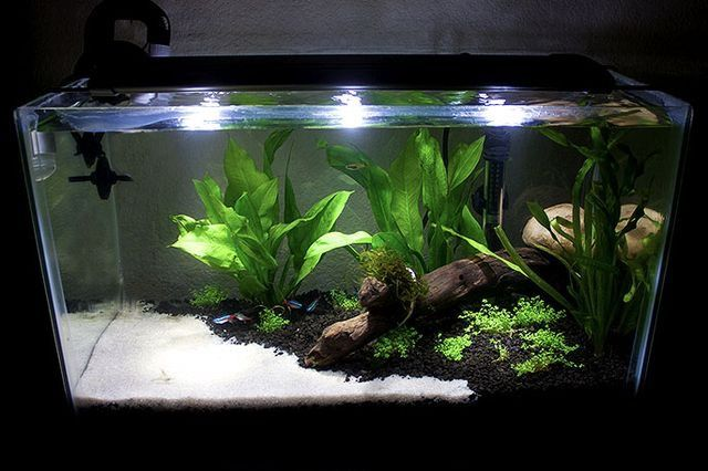 Great split look other pets pinterest aquariums for Split fish tank