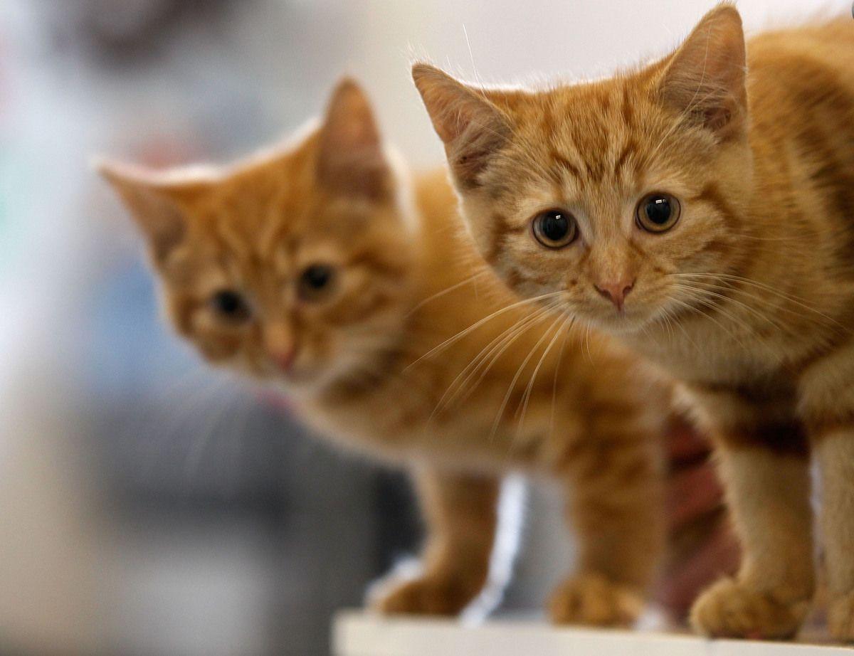50 Cute orange Kitten Names