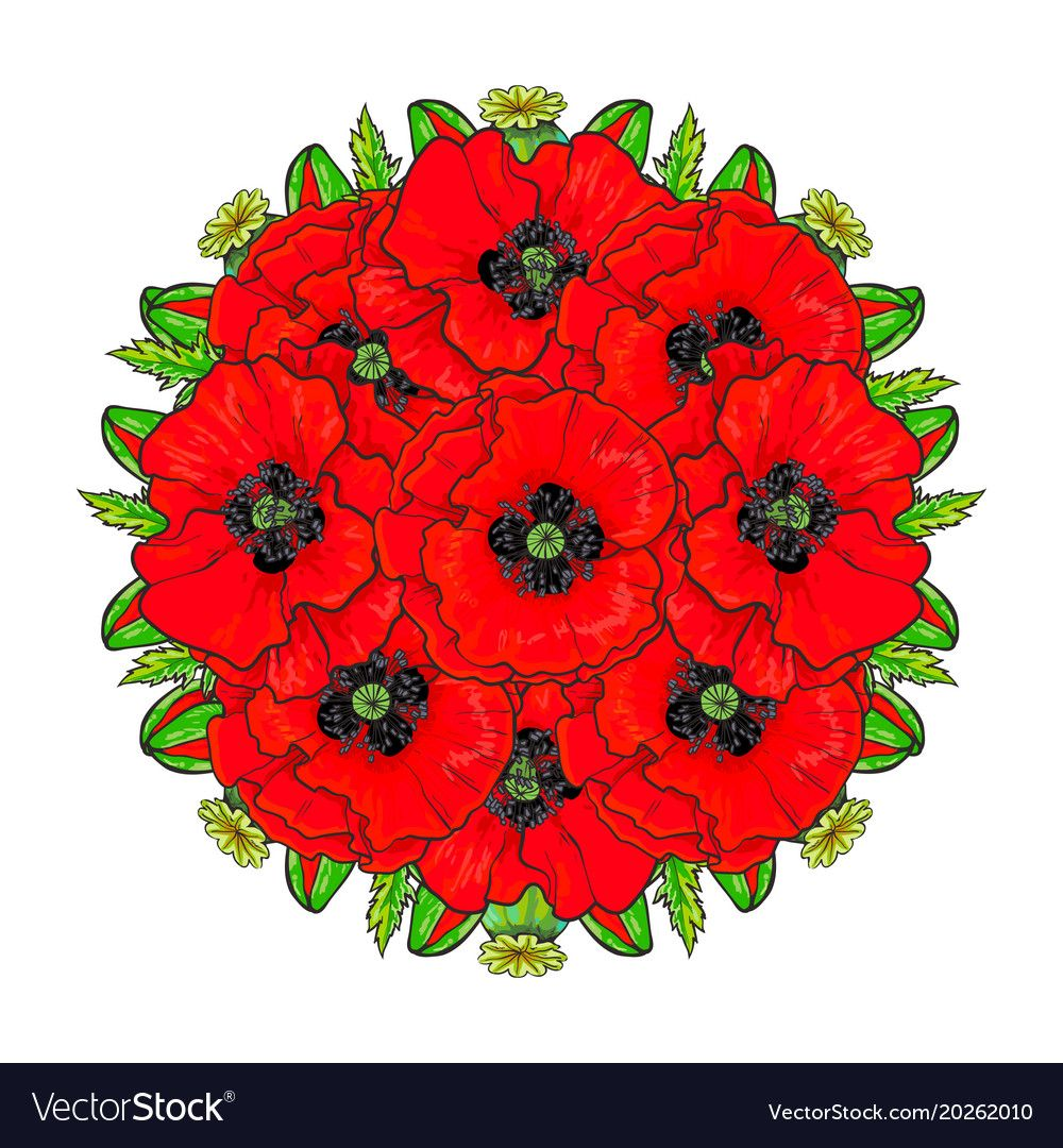 Vector sketch Red poppy flower bouquet with closed opened