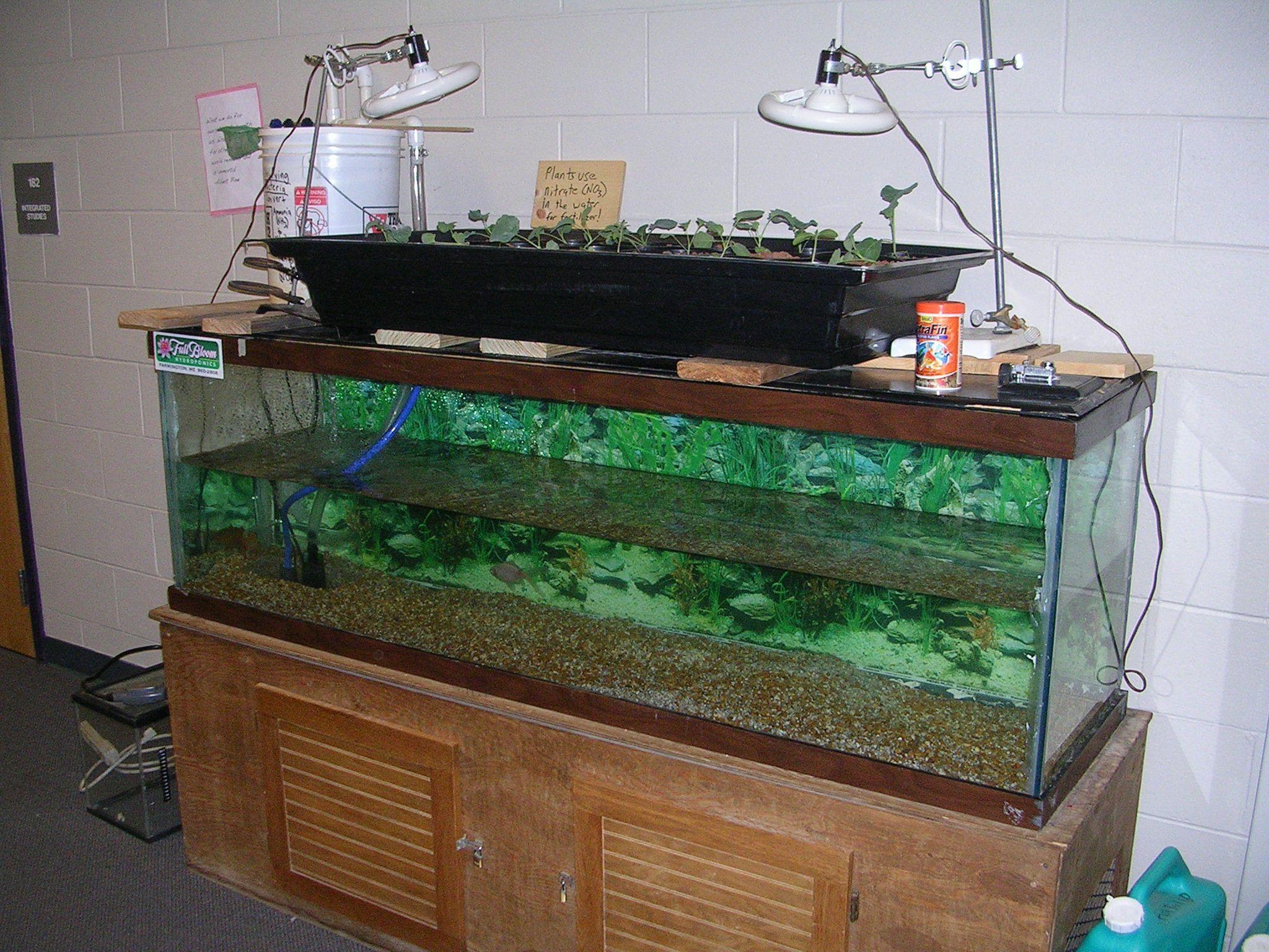 25 super easy aquaponics diy fishtank that you may make