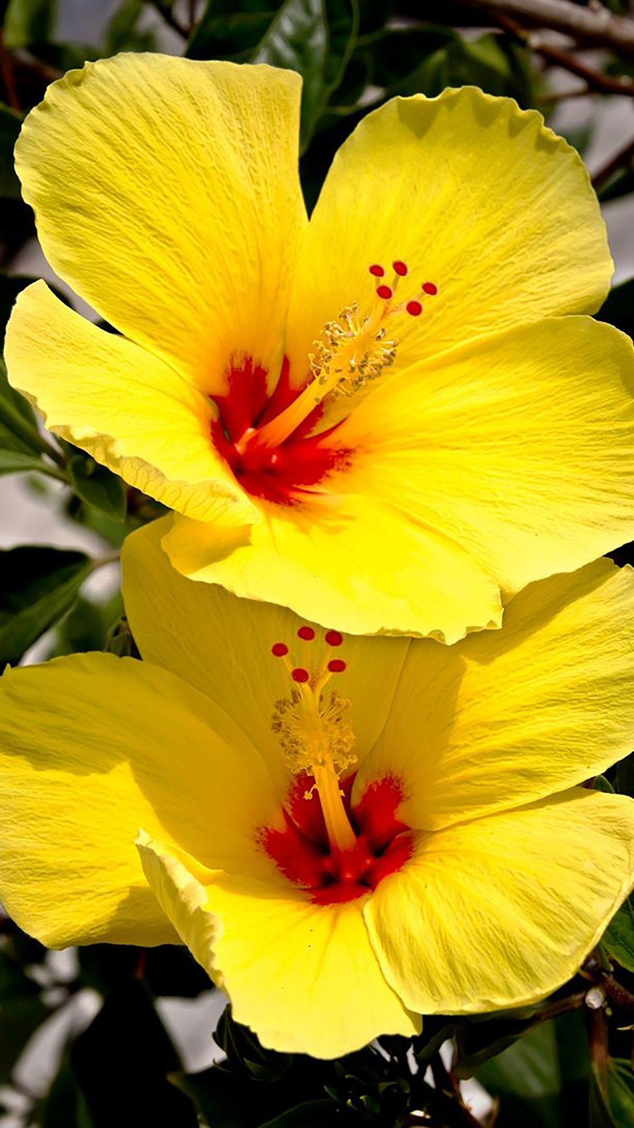 Wallpaper By Artist Unknown Beautiful Summer Tropical Flower