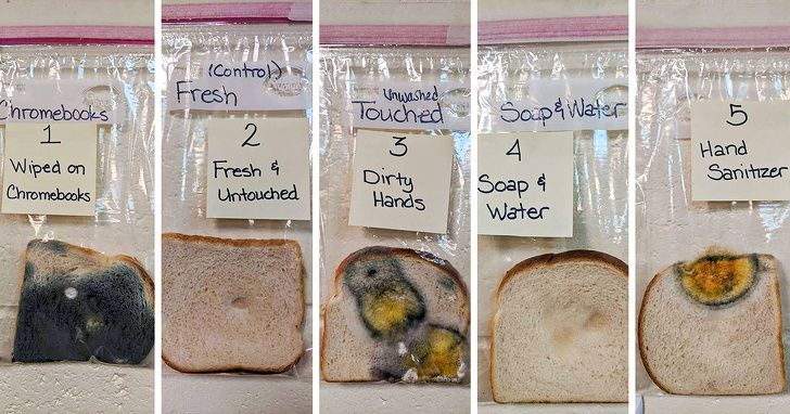 A Teacher Did An Experiment To Show The Power Of Handwashing And