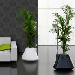 An Insight Into Indoor Plant Containers | Plantas e folhagens ...