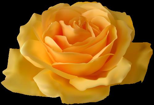 Yellow Rose Png Clipart Yellow Roses Rose Beautiful Roses