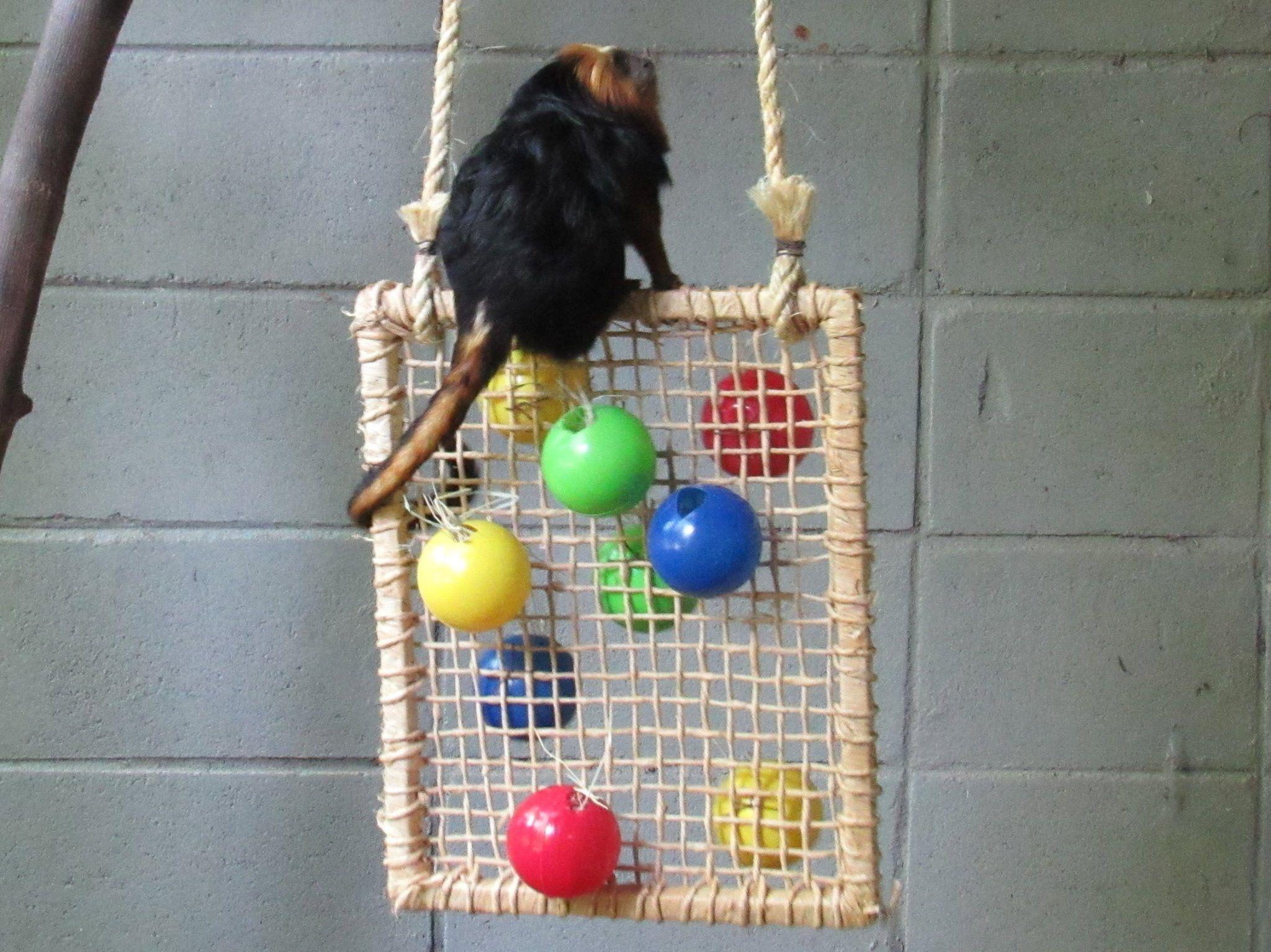 exotic animals net