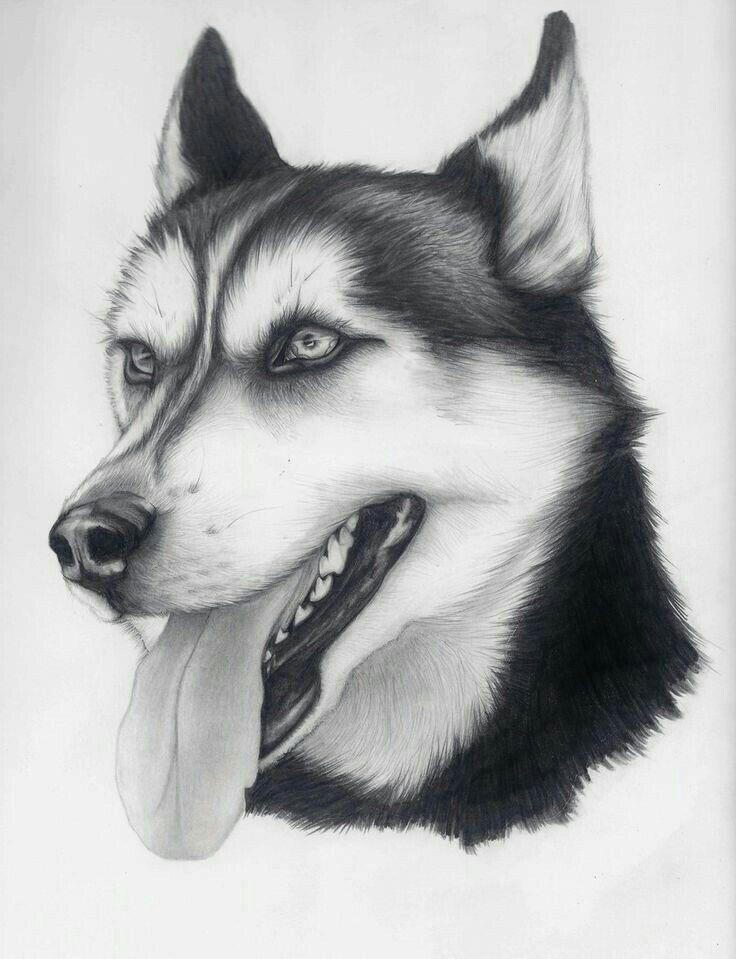 Dibujo Perros Dibujos A Lapiz Dibujo De Perro Pintura Perro
