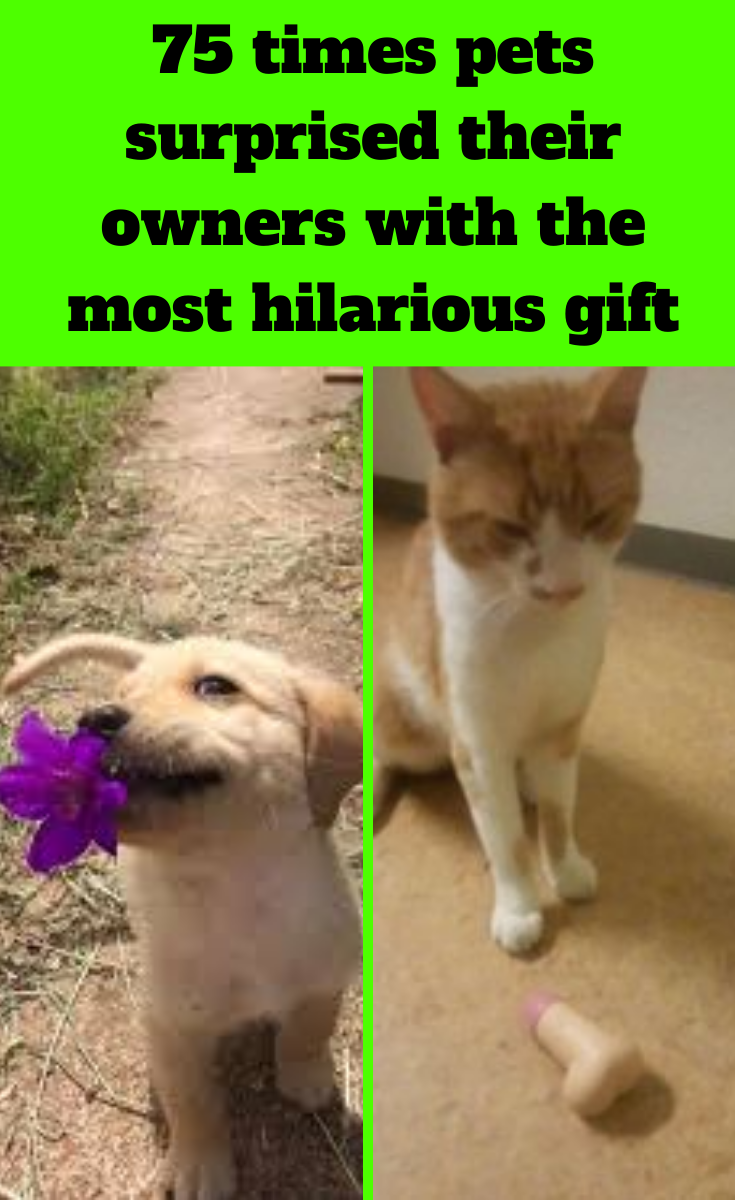 70 Times Pets Surprised Their Owners With The Most Hilarious Gift In 2020 With Images Funny Gifts Pets Hilarious