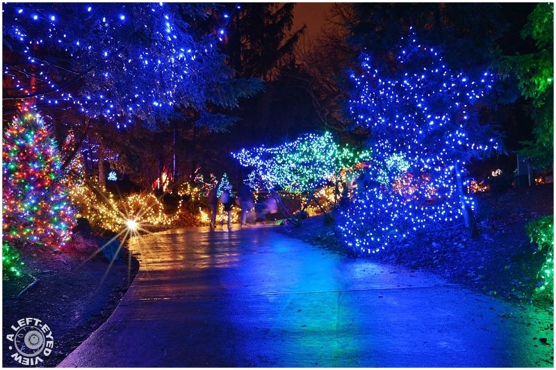 Pin By Julie Harrington On Tinsel Hunter Grace Holiday Lights Display Brookfield Zoo Zoo Lights