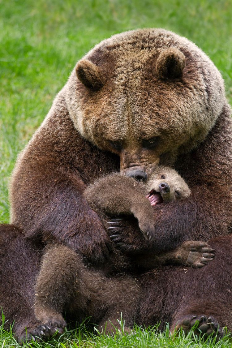 Great, Now I'm Sad About the Baby Bear Video — The Cut