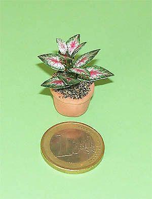 Plantas miniatura y flores miniatura