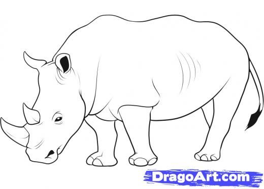 Easy to follow DIY rhino sketch How to Draw a Rhino 11 steps - fresh realistic rhino coloring pages