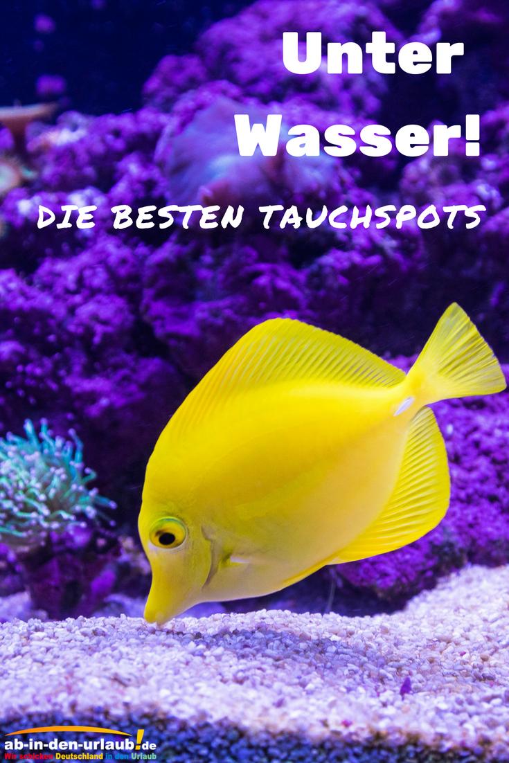 Unter Wasser: Das sind die besten Tauchspots der Welt! 🐠🐟🐚 #abindenurlaub #tauchen #schnorcheln #unterwasser #urlaub