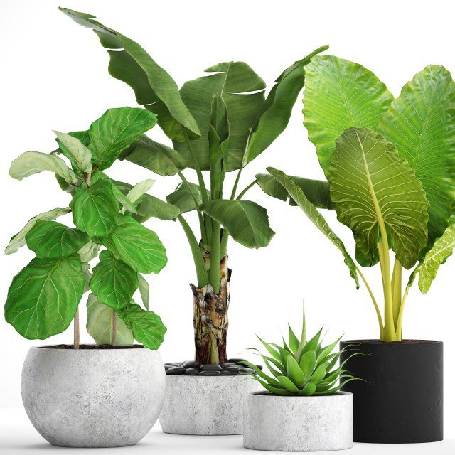 Collection plants 3D Model .max .c4d .obj .3ds .fbx .lwo .stl @3DExport.com by deckorator