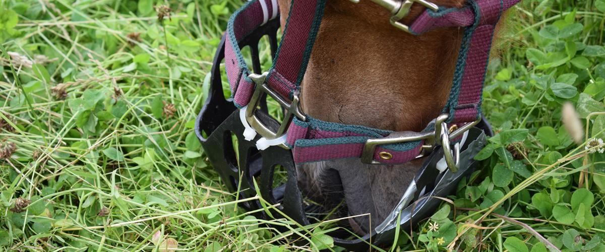 Improve your grazing muzzle