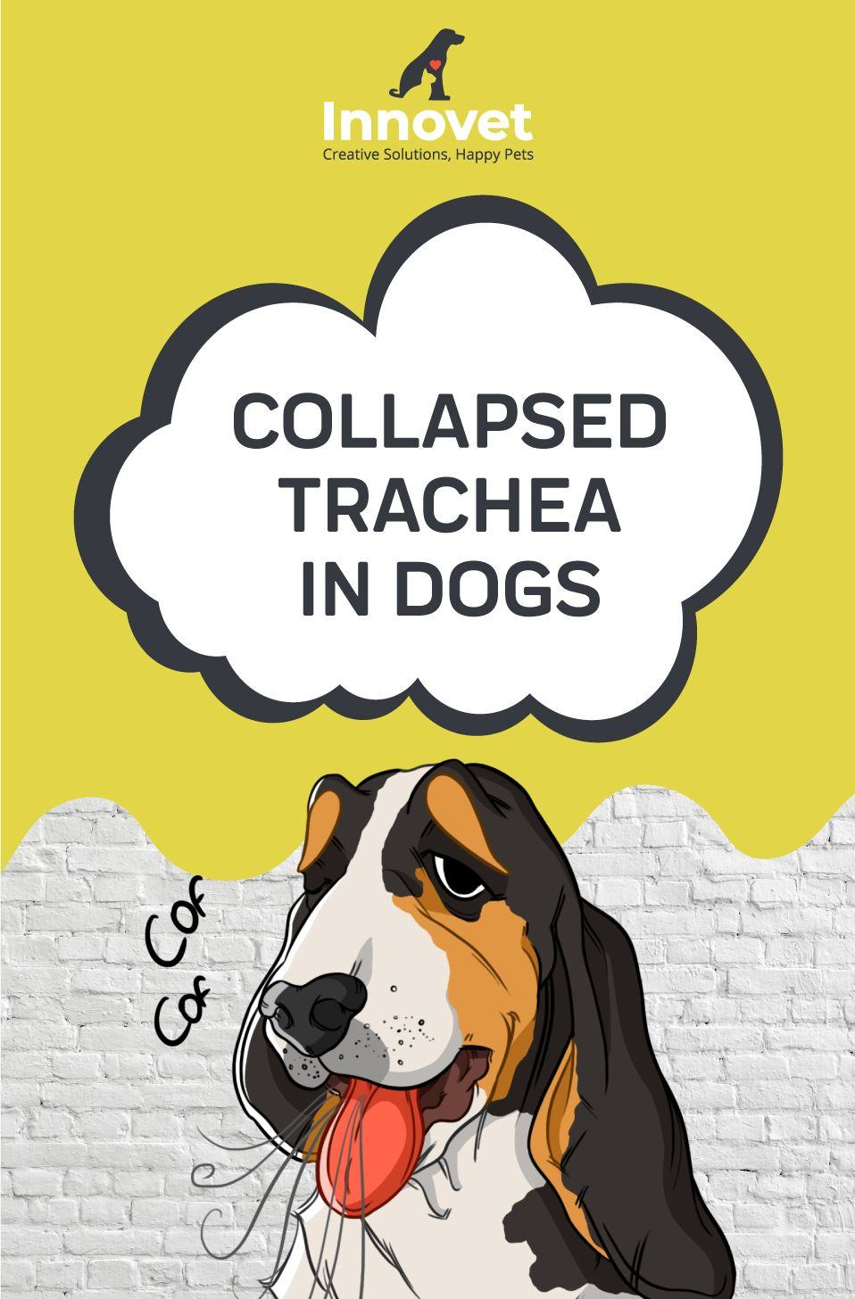 Collapsed Trachea In Dogs Dogs, Dog coughing, Pets