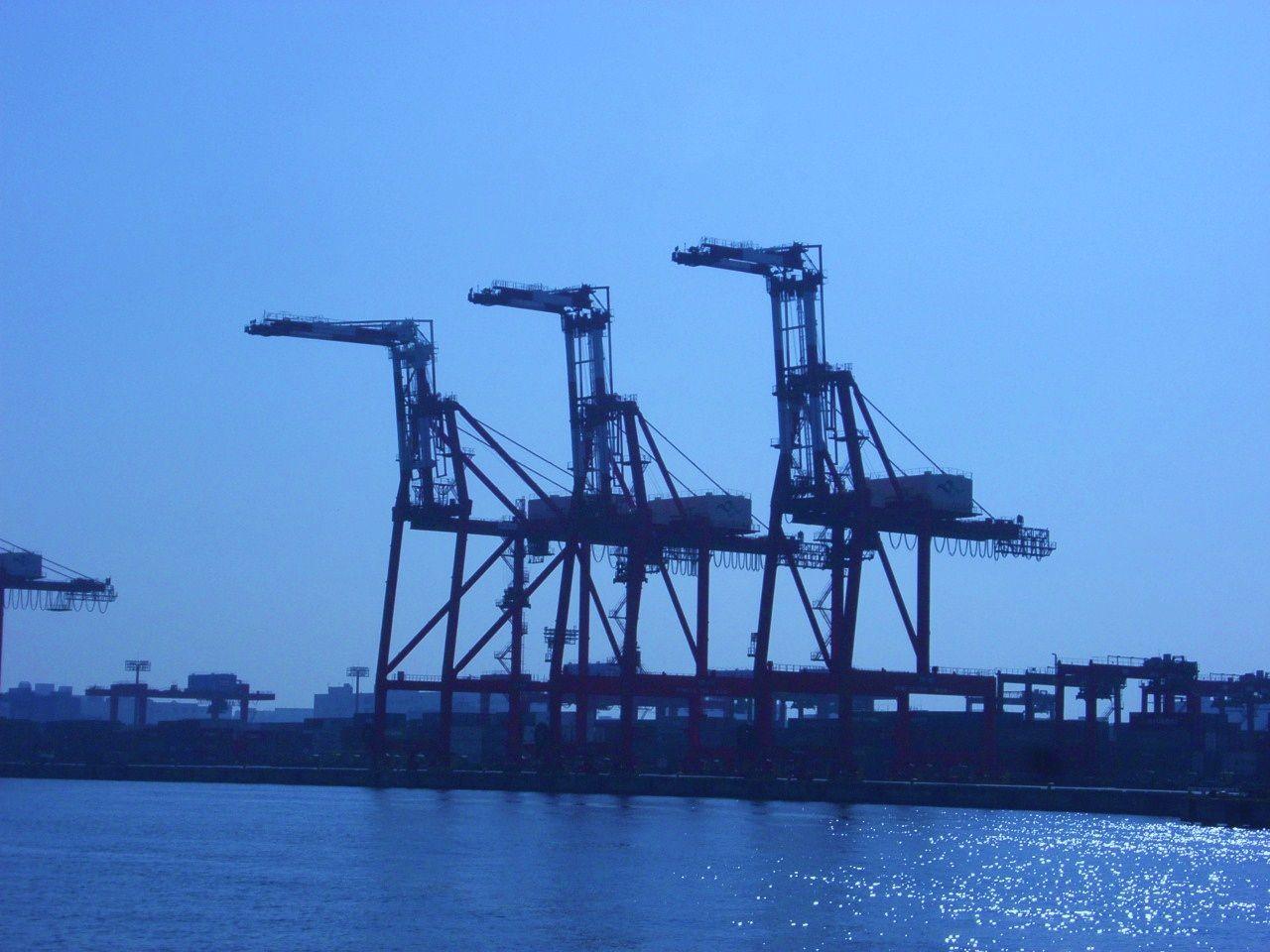 Giraffes standing on wharf