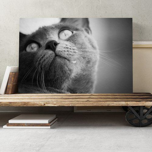 British Shorthair Cat Photographic Print On Canvas Big Box Art