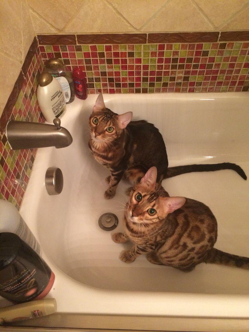 my babies sitting in my bathtub. weirdos | AboutMe | Pinterest ...