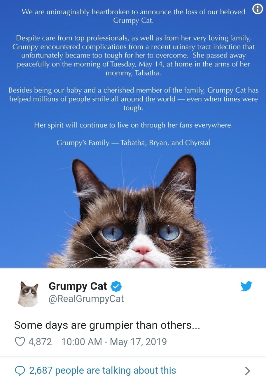 Grumpy cat dies at the age of 7. Reddit was the rise to