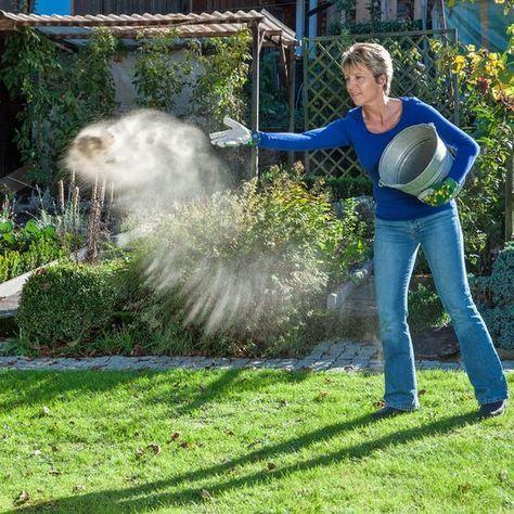 Moos dauerhaft entfernen: So wird Ihr Rasen wieder schön #apartmentgardening