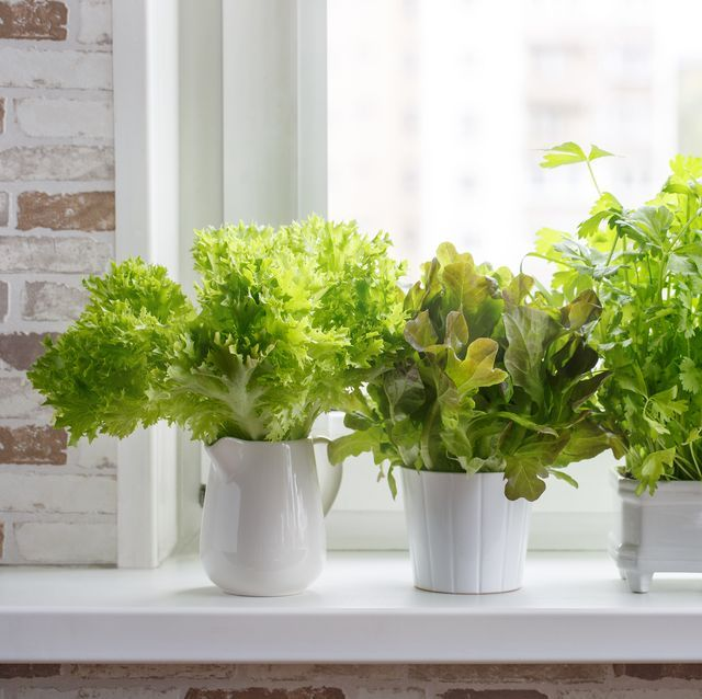 These Indoor Herb Gardens Will Bring Your Kitchen To Life 640 x 480